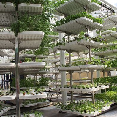 vertical farming esl lesson